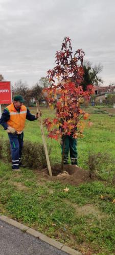 Zasadi drvo, ne budi panj